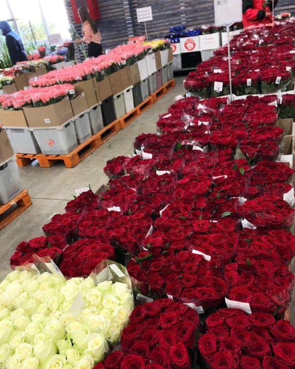 Цветы оптом продажа крымская роза, атласных лент