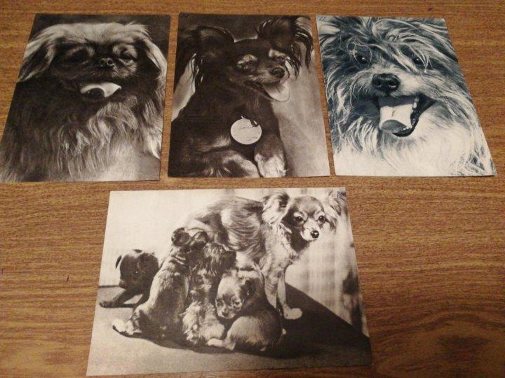 Картинки, набор открыток собаки