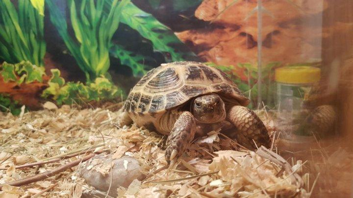 атерома террариум для среднеазиатской черепахи фото всегда