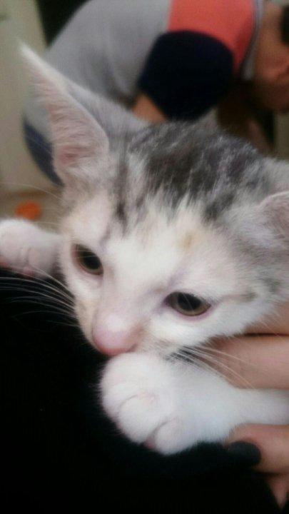 Кот Снупи - звезда интернета (32 фото) | Кот снупи, Милые детеныши ... | 720x405