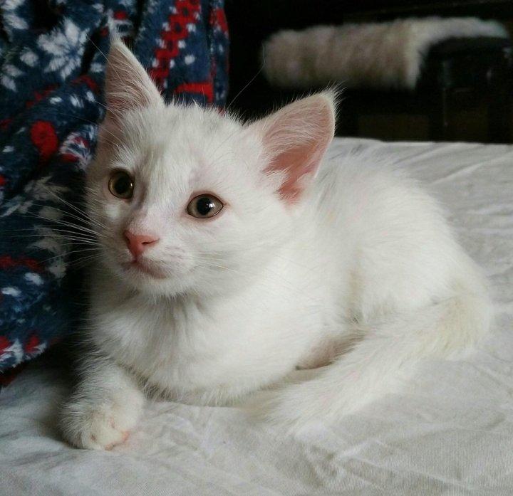 животные чувством котята турецкая ангора см фото яиц выпустить