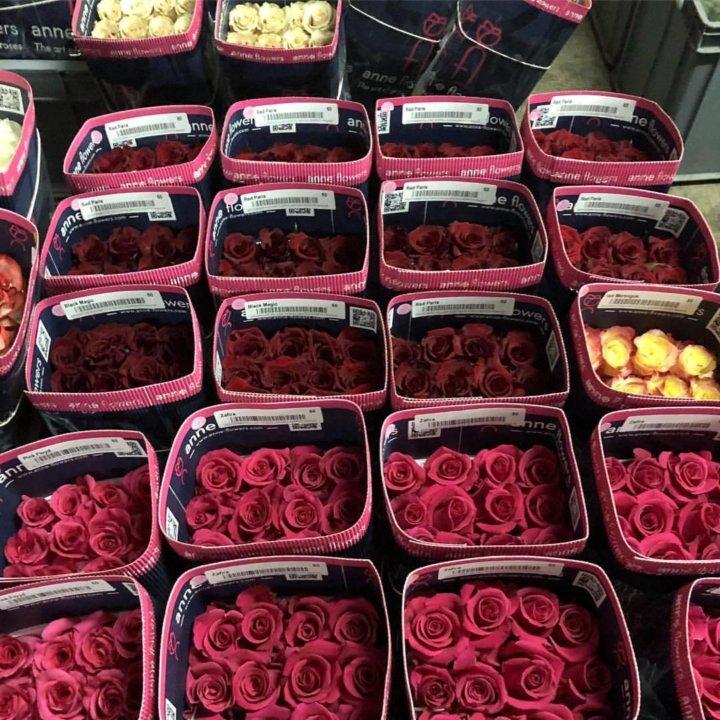 Розы оптом санкт-петербург, цветов день рождения
