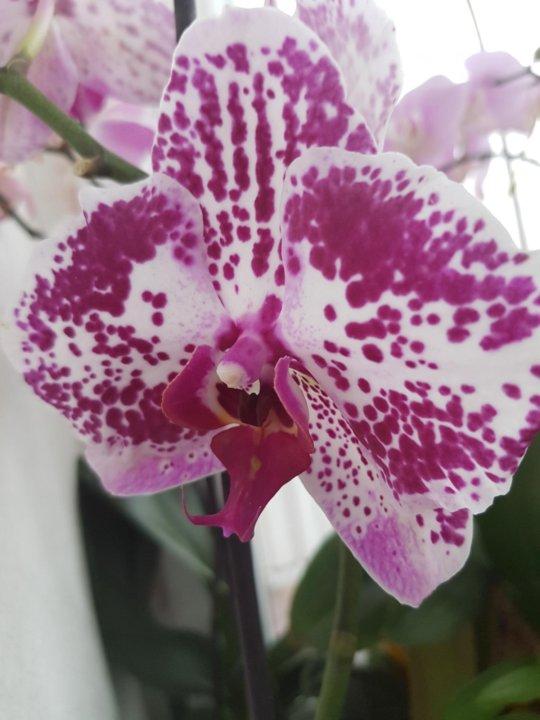 Красивое фото цветка орхидея