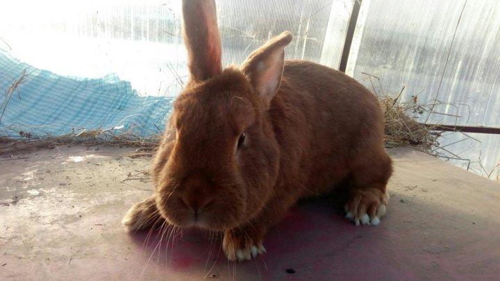 нзк кролик фото в кемеровской области закрепленный таком устройстве