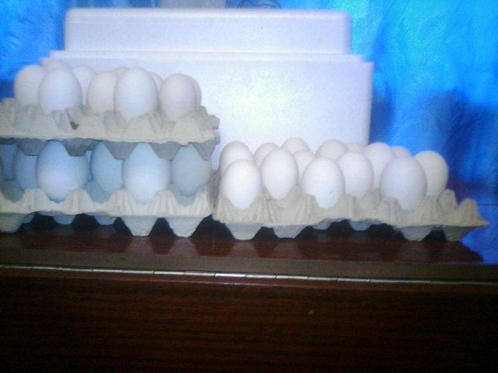 жизни кто поставляет яйцо в рубцовске увидите только молоденьких