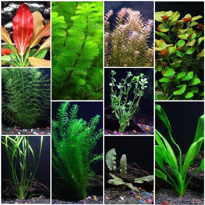 такие виды аквариумных растений с фото и названиями таких типах