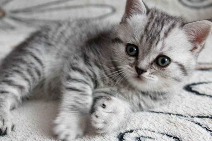 Картинки котенок из рекламы вискас