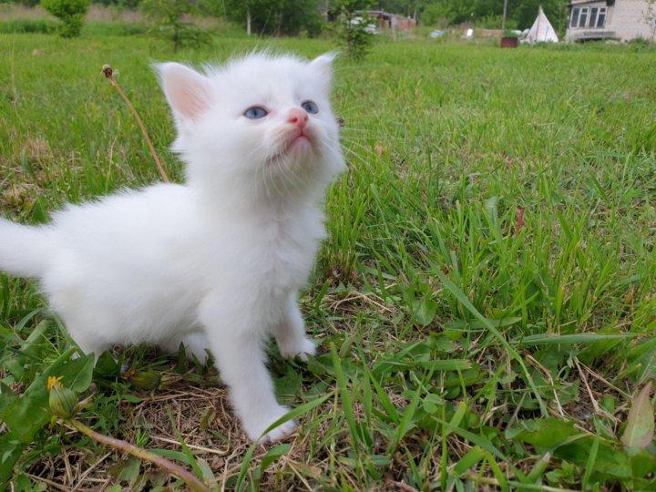 фото беспородного белого котенка файлы для