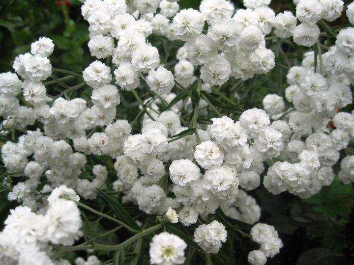 объявил конкурс белый жемчуг цветы фото свадьбе все