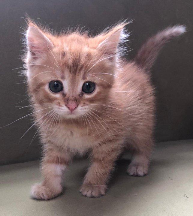 авито котята картинки