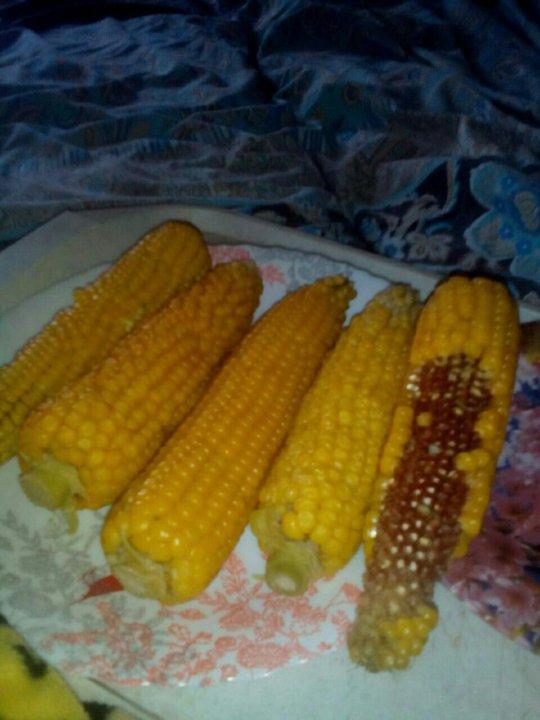 Кукуруза Початок Для Похудения. Кукурузная диета. Польза и вред при похудении