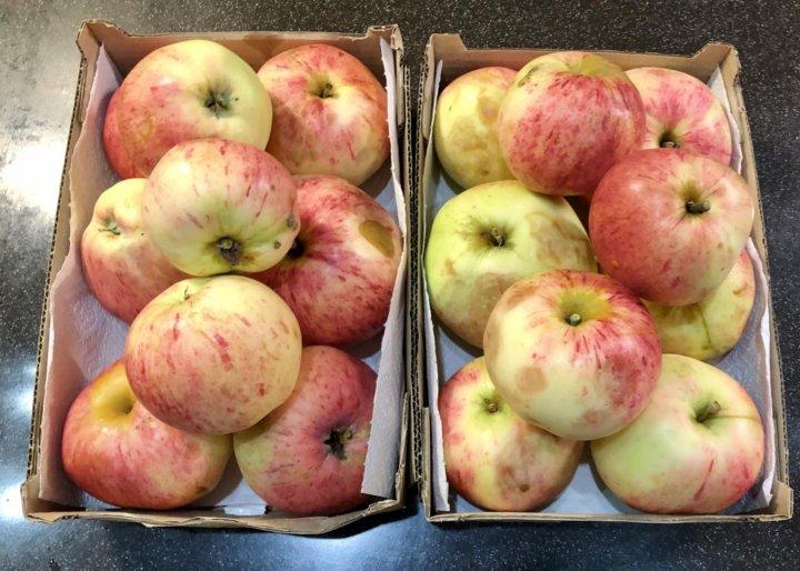 Диета Садовые Яблоки. Яблочная диета – простой способ похудения!