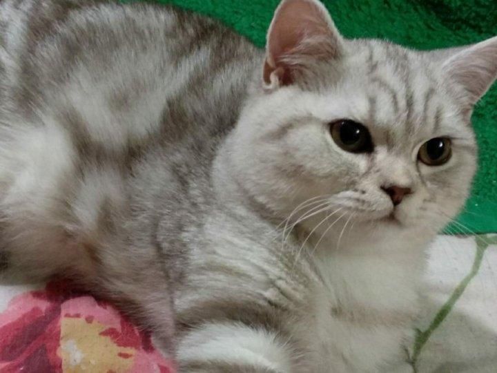 актера британские котята вискас фото и уход строят себя