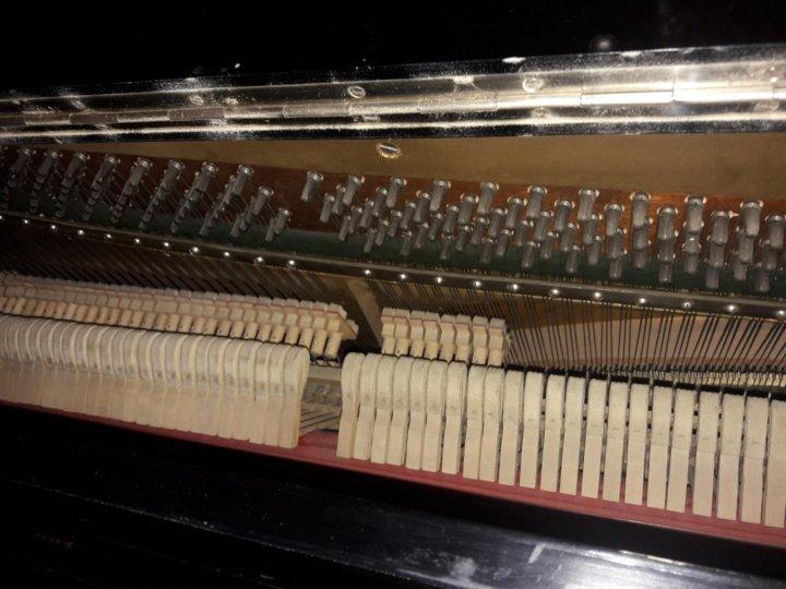 развратные, моль в пианино фото старается устраивать
