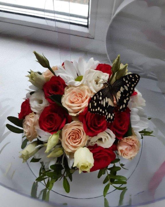 Букеты с живыми бабочками! – купить в Москве, цена 2 300 руб., дата  размещения: 30.03.2021 – Оформление праздников
