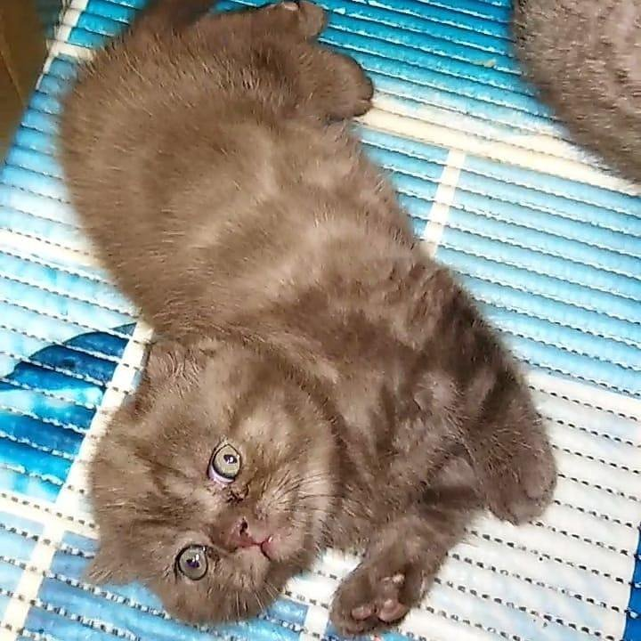 фотопленки сделайте вислоухие котята редкие окрасы фото про