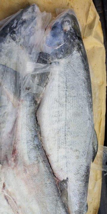 Диета на рыбе кета