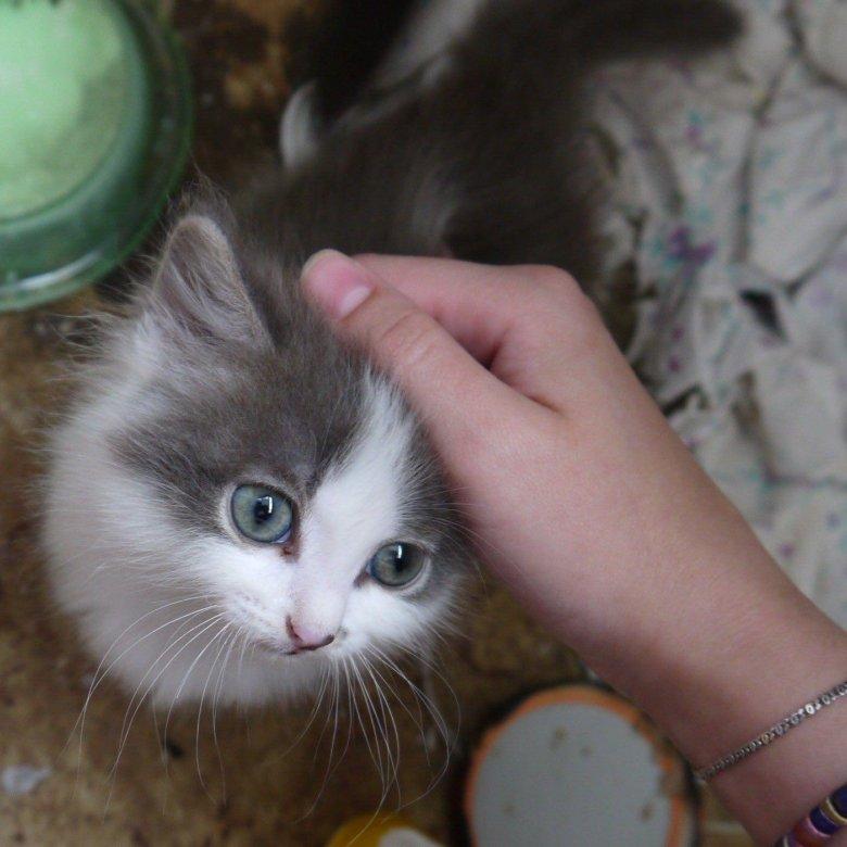 Отдам котят братск фото