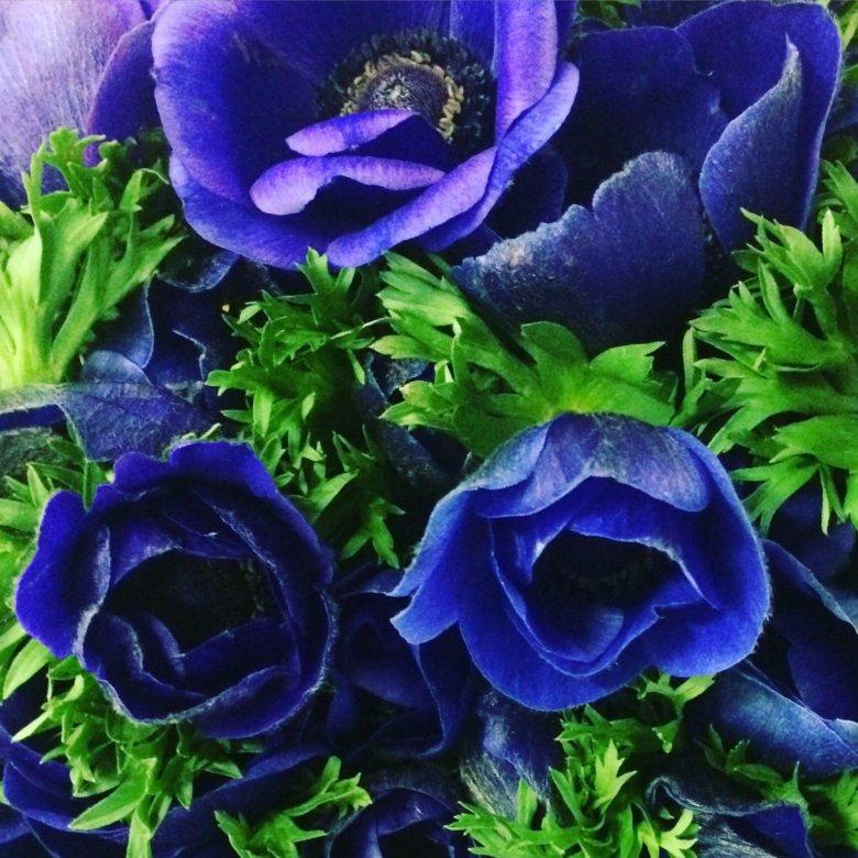 Букет невесты, цветы анемоны купить в москве