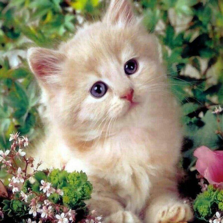 Картинки кошек на мобильный