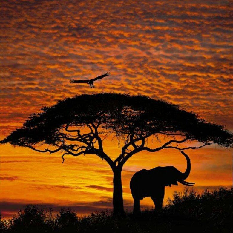 своем красивые картинки африка открыть