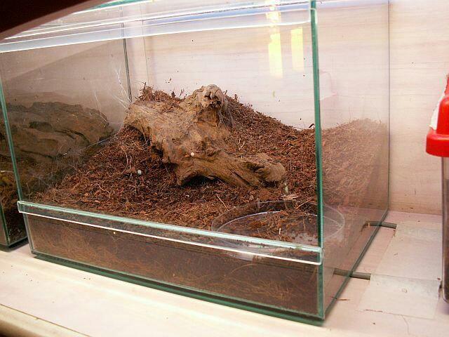 террариум для паука своими руками фото антиквариата