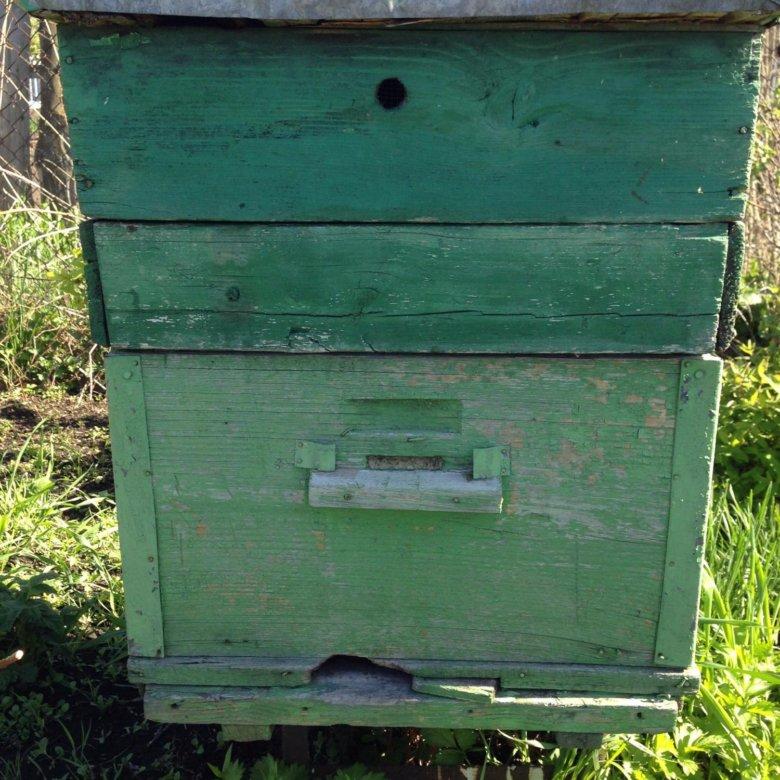 Куплю улей для пчел в калининграде