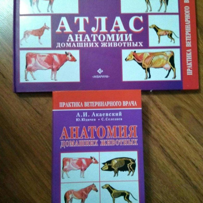 анатомический атлас животных в картинках нормативным документам банка