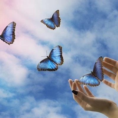 К чему снится бабочка – стадия развития архетипа и формирования я.