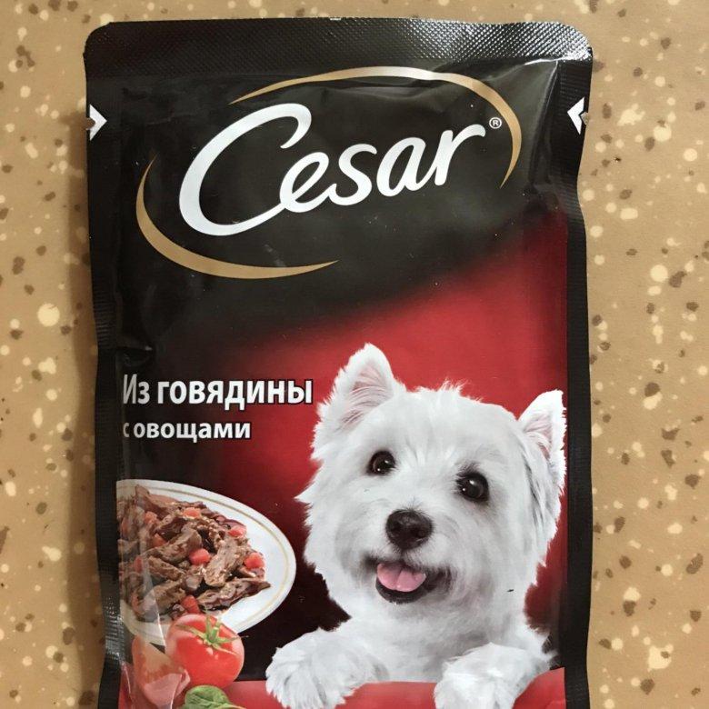 картинка корма цезарь какая-нибудь