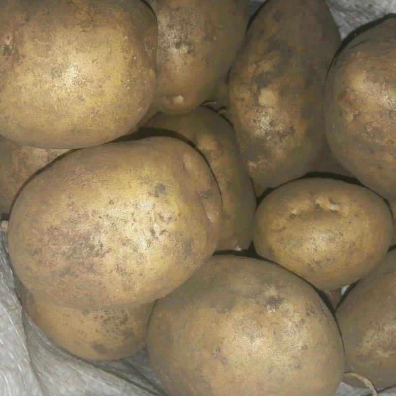 правильно фото битвы картофеля невский свадебные платья неповторимы