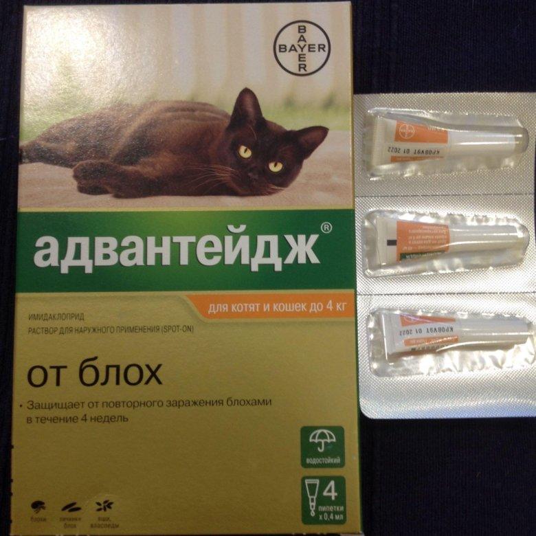 адвантейдж для кошек для чего