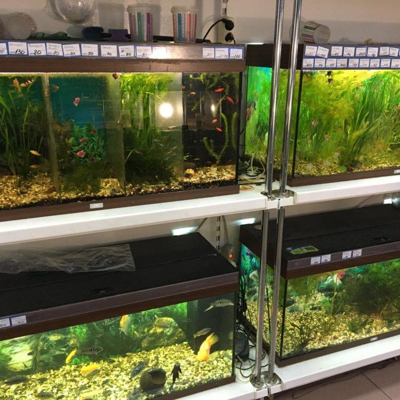 Все объявления в чебоксарах / животные / аквариум.