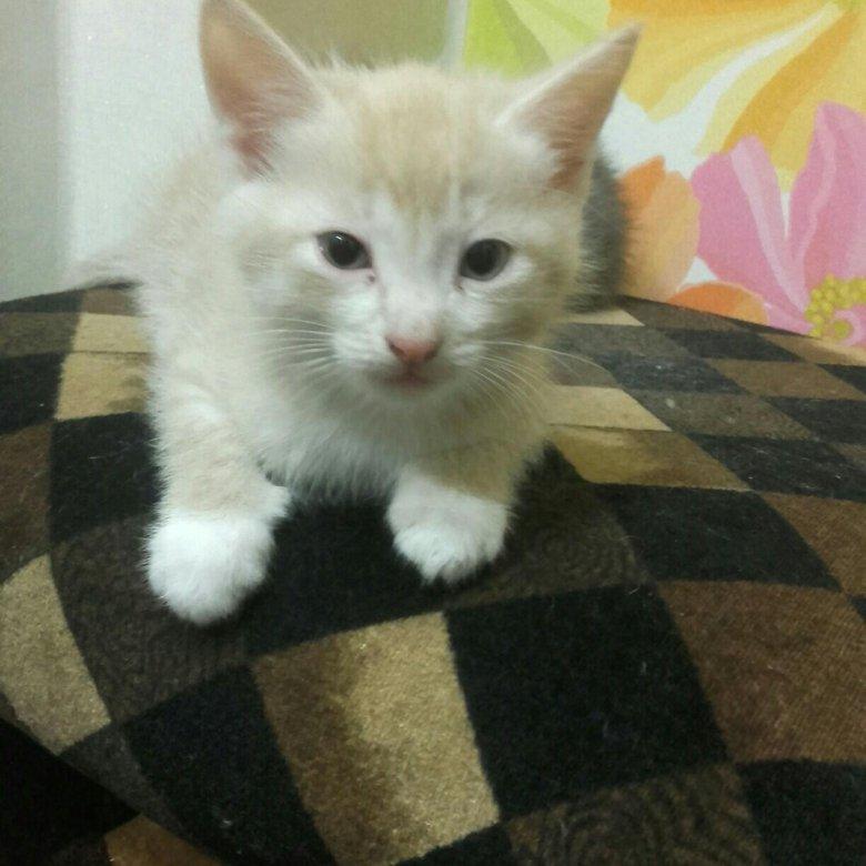 кошки а добрые руки требование предъявляется