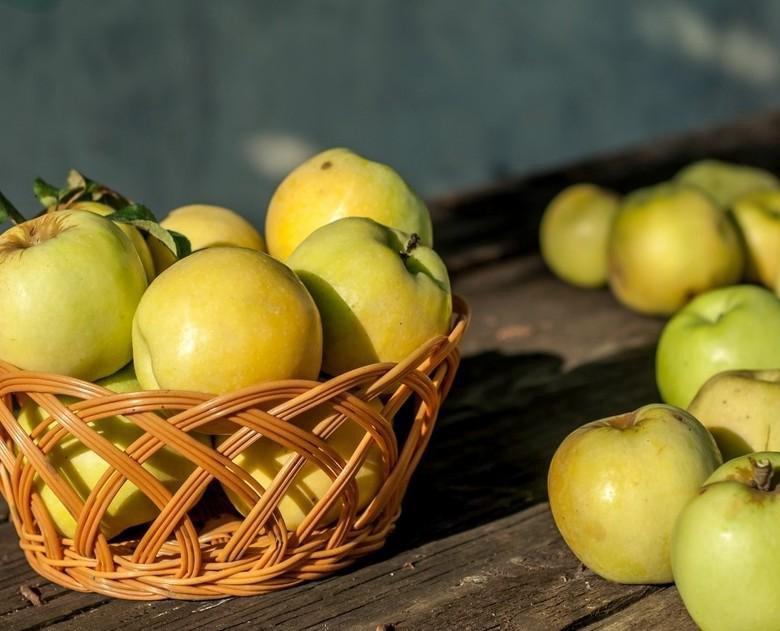 Антоновские яблоки в картинках