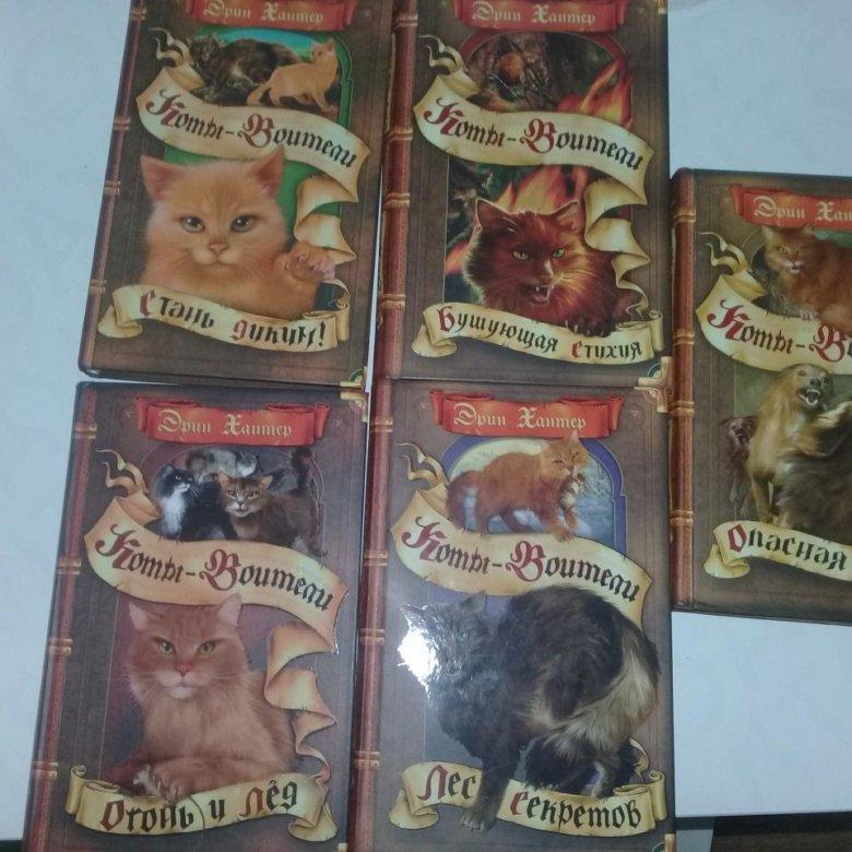 Расписание коты воители
