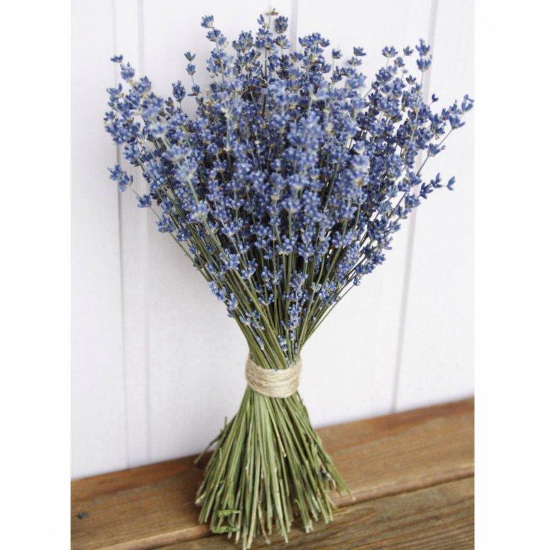 Фрезия, купить цветы лаванды в спб