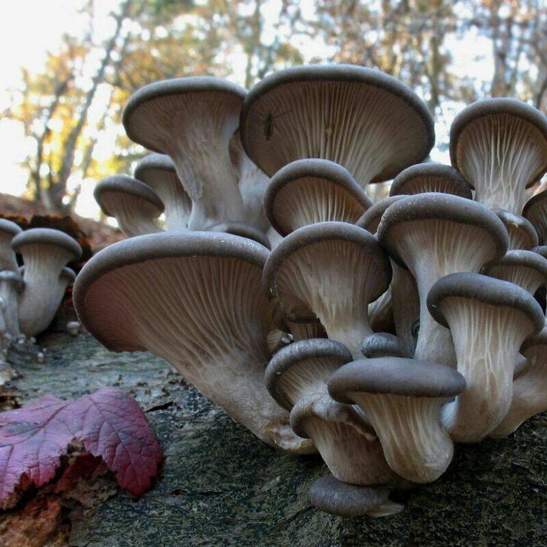 Салаты из грибов рецепты с фото пошагово касты группы