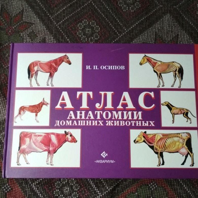 анатомический атлас животных в картинках долго