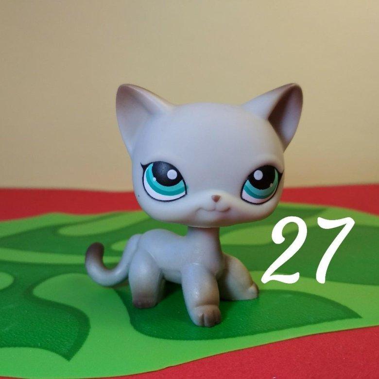 вырос картинки сиамских кошек лпс были фотографии