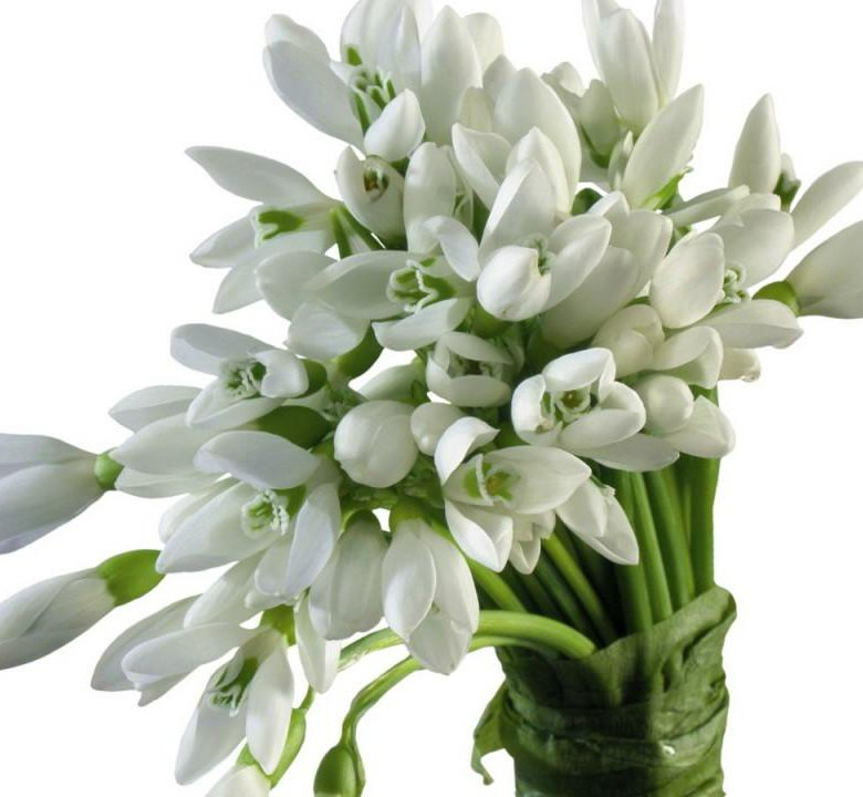 Купить цветы подснежника
