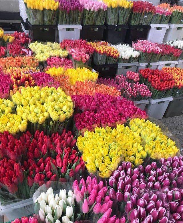 Восьмому, цветы оптом в бресте