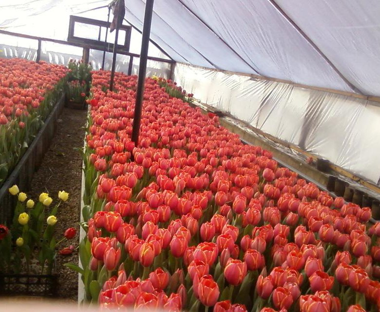 Цены на живые цветы оптом симферополь, композиции