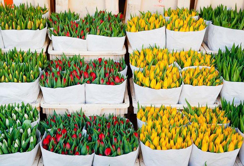 Оптовые продажи цветов в белоруссии, цветов доставкой воронежу