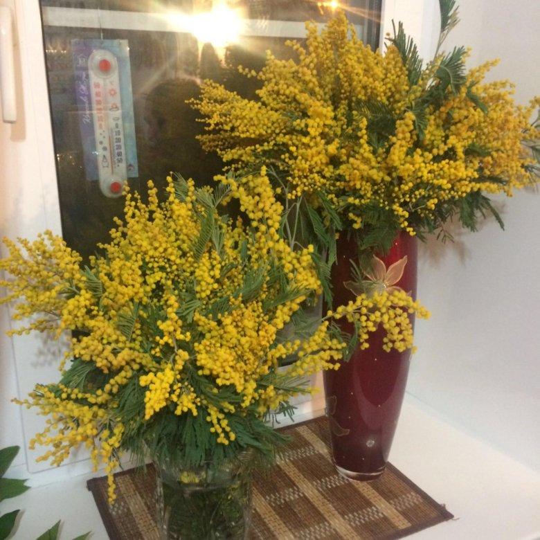 Цветы мимоза в красноярске купить