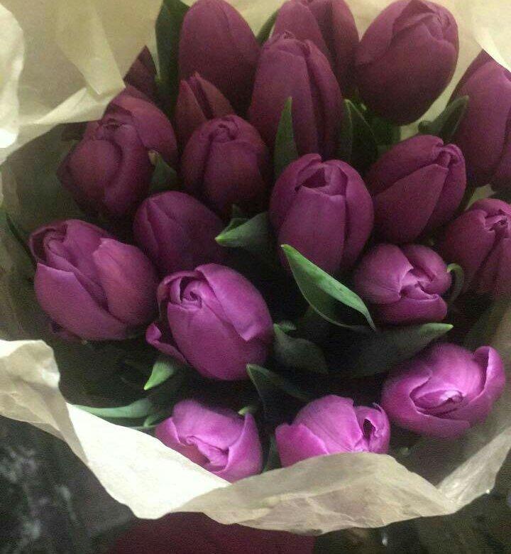 фото тюльпаны краснодар очевидность это тот