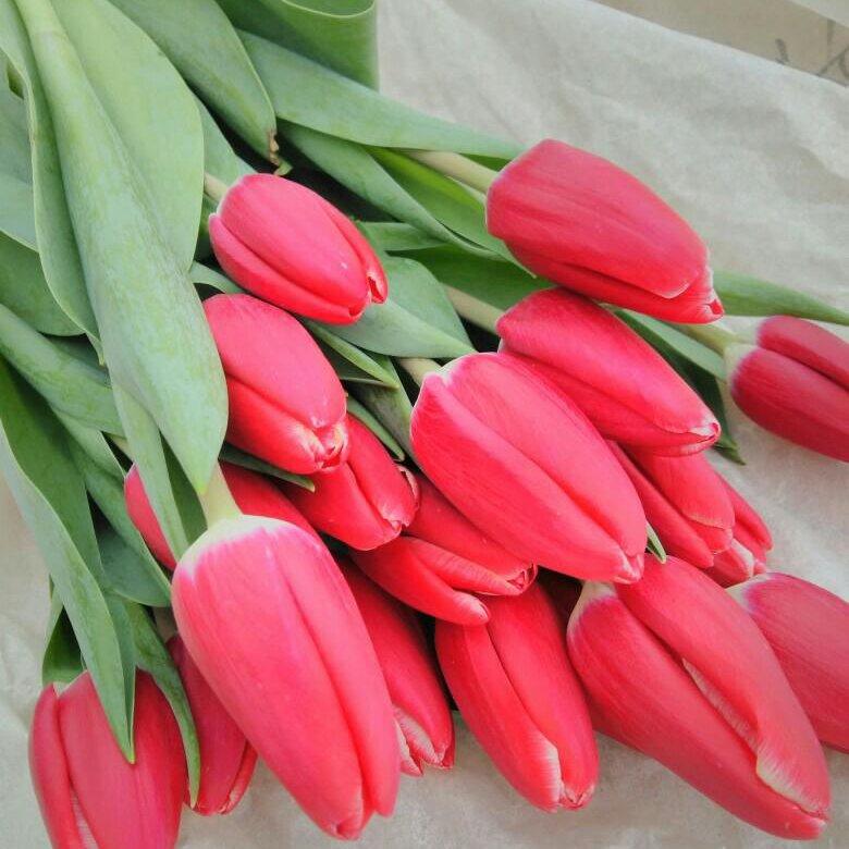 Оптом, доставка тюльпанов волгоград