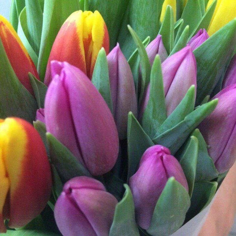 Купить, цветы тюльпаны купить в тюмени