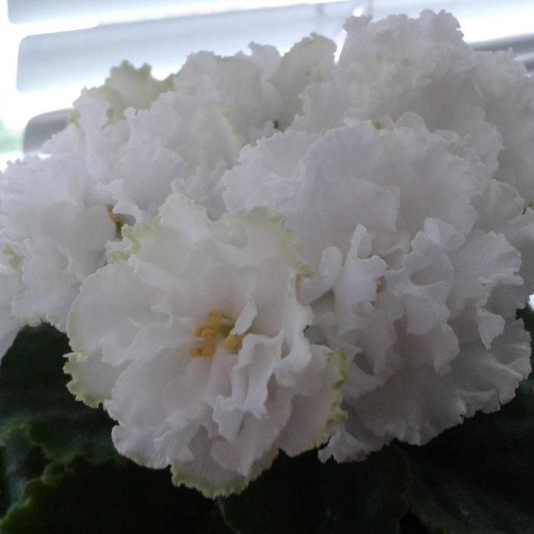 Букет цветов, сенполия каталог зимний букет