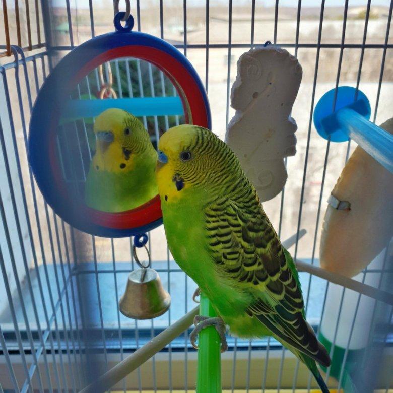 дочери фотки попугаев в клетке своим